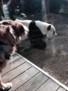 Sophie and Po the Panda