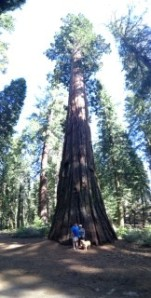 A couple and guide dog at the base of a giant Sequoia tree