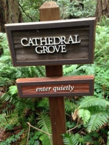 "A sign which reads ""Cathedral Grove-enter quietly"""