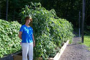 Trina in the tomato patch